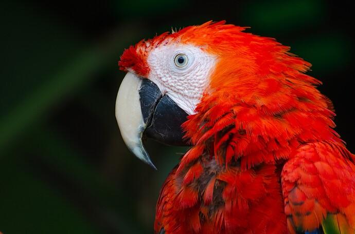 bird-1834401_1920