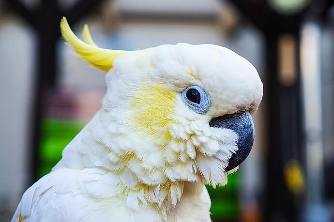 parrot-2509677_1920