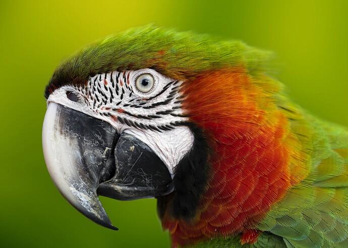 macaw-5952965_1920